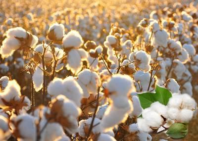 tkany-bedlinen-cotton.jpg