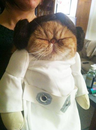 костюмы Хэллоуин для кошек, кошки в смешных костюмах
